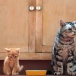 Caro gattino