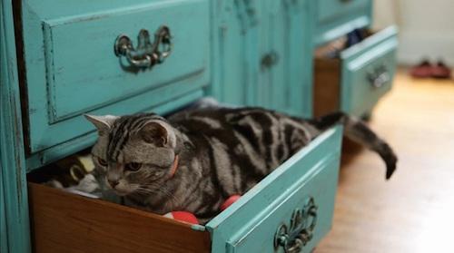 micio nel cassetto