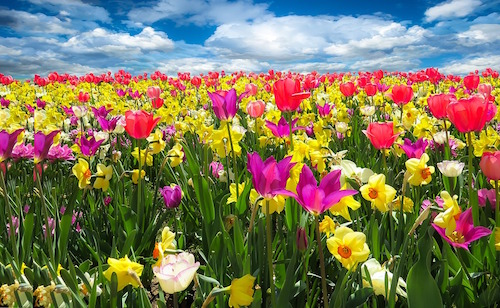 risveglio primavera