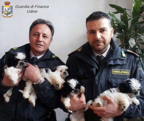 traffico illegale cuccioli