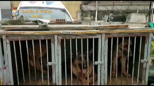 Napoli, canile abusivo