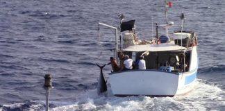 Palermo fermati pescatori di frondo di tonno