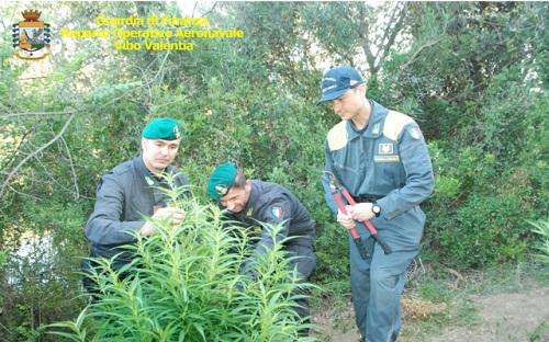 Vibo Valentia sequestro piantagioni Canapa Indiana