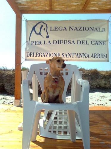 cagnolino spiaggia