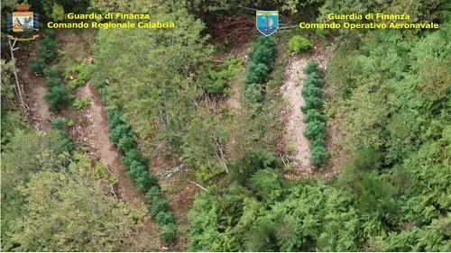 Calabria, scoperte 8 piantagioni di marijuana