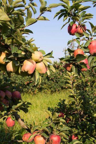 Frutteto giardino
