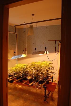 Nardò: coltivava marijuana e si appropriava di energia elettrica, arrestato dalla polizia