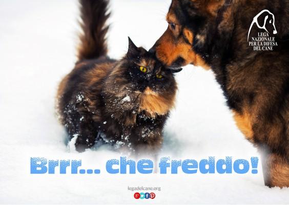 campagna-freddo-2016-lndc