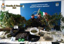 Bari scoperta coltivazione Marijuana