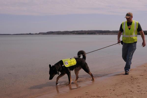 Cani amici dell'ambiente: l'olfatto per monitorare lo stato delle acque