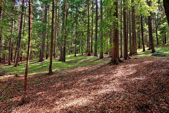 Giornata Mondiale delle Foreste, nuovo testo unico forestale