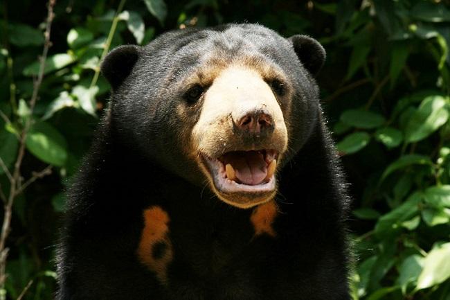 Convegno nazionale sulla conservazione degli orsi in Myanmar