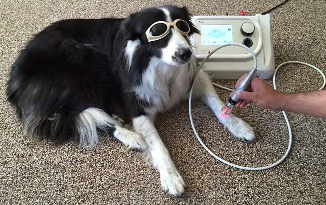 cura animali attraverso laser tecar onde d'urto