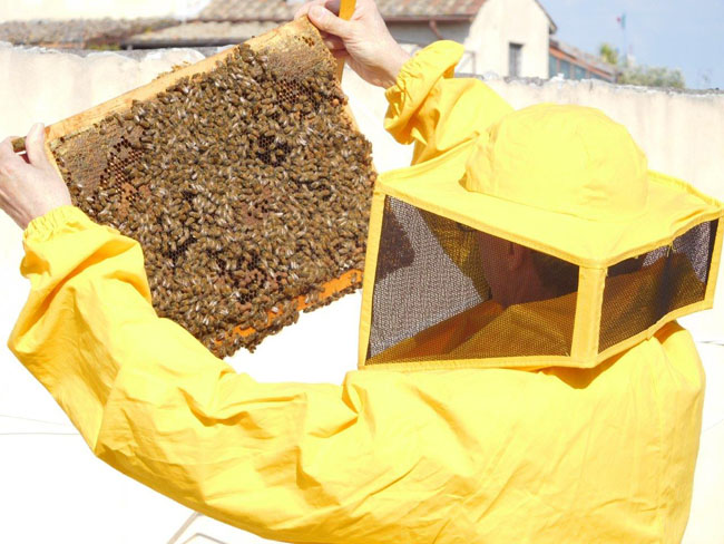 Roma monitoraggio smog commento Federazione apicoltori