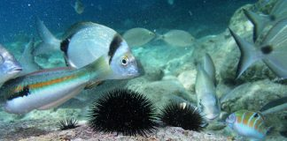 CMAS-coppa del mondo-pesca subacquea
