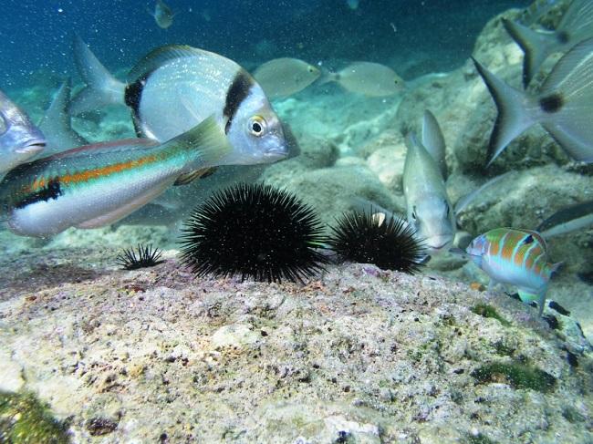 CMAS: Coppa del Mondo di pesca subacquea a Biserta (Tunisia)