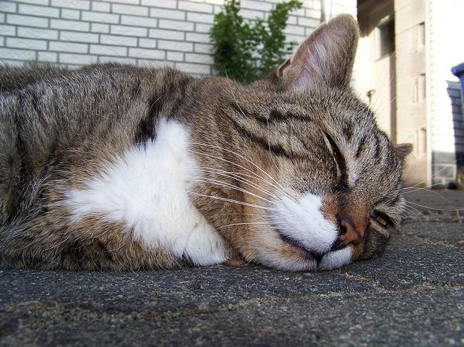 gatto sonno