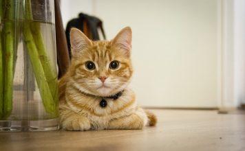 gatto casa
