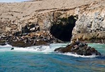 Lobos marinos en las Islas Palomino
