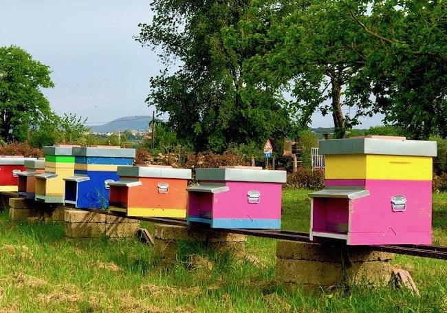 fai apiario censimento