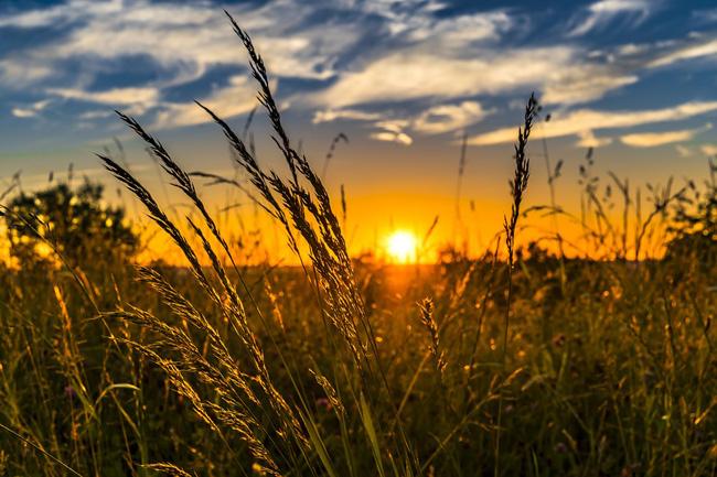 grano agricoltura