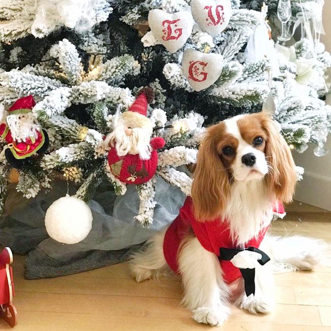 Decorazioni natalizie, consigli per creare l'atmosfera perfetta