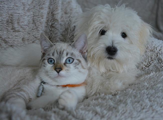gatto cane