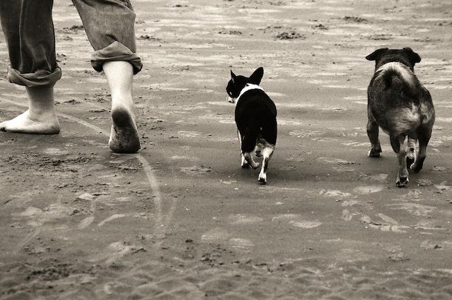 padrone cuccioli pet