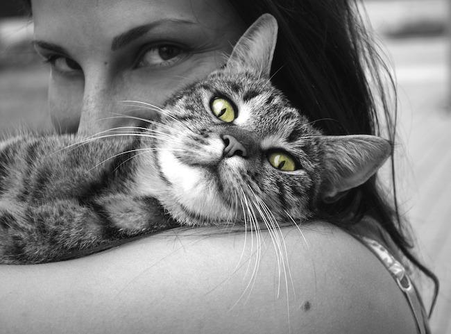 gatto coccolato
