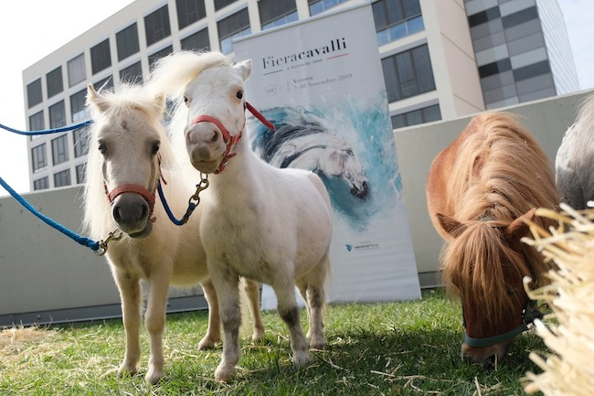 riding the blue pony