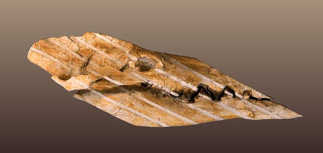 aegyptocetus skull