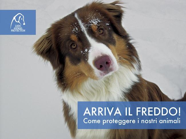 protezione freddo animali