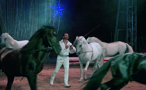 cavalli circo togni