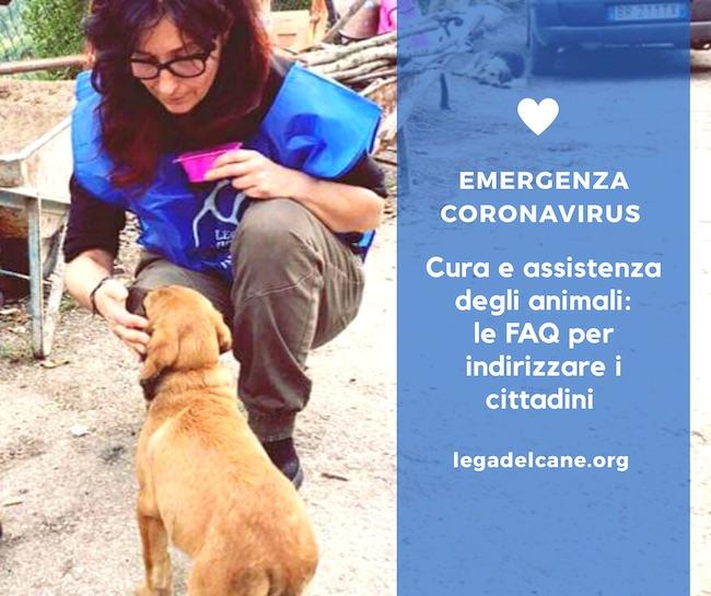 coronavirus cura assistenza animali