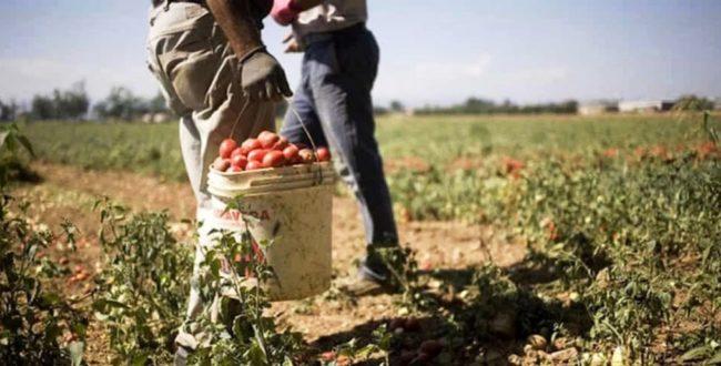 Braccianti manodopera agricoltura