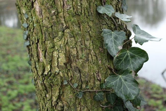 albero foglia