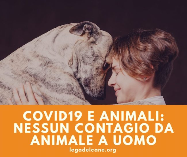 covid19 animali no contagio