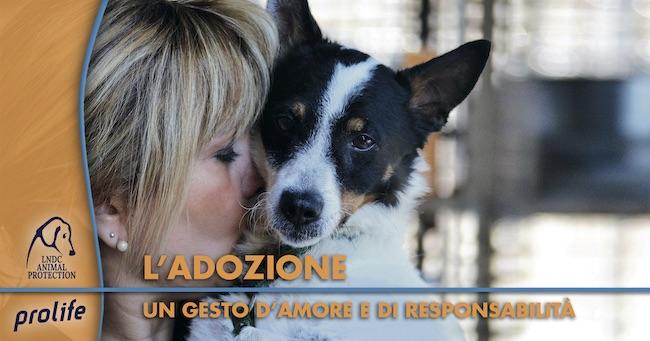 adozione lega del cane