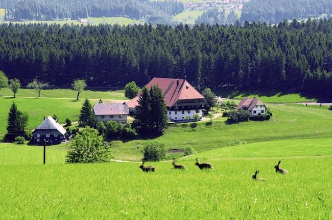 foresta nera fattoria