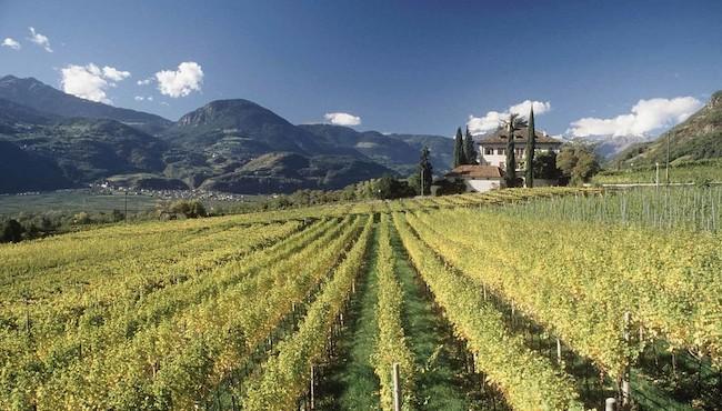 La Via del Vino di Terlano