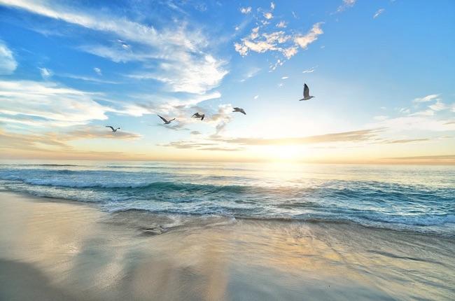 alba uccelli spiaggia