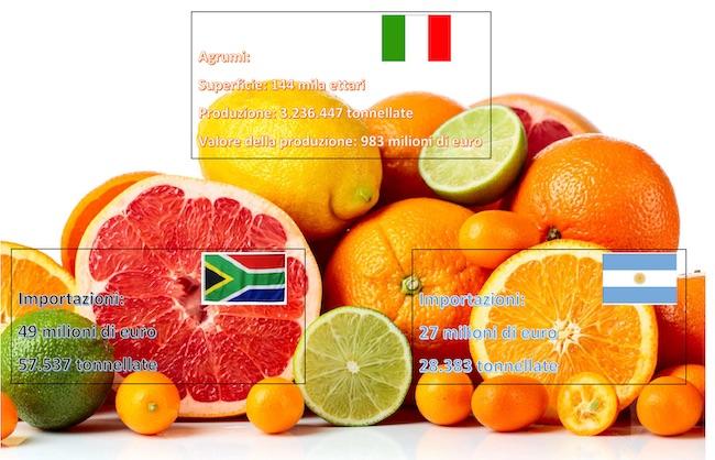 info grafica agrumi