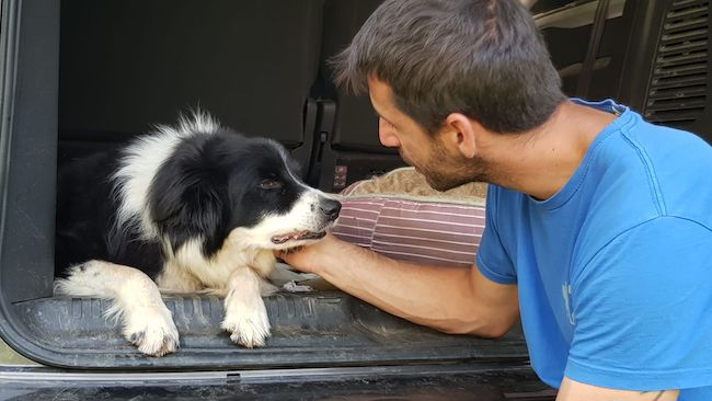 costamagna cagnolino